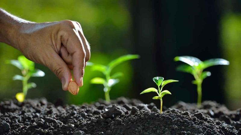 5 культур, на семенах которых не стоит экономить