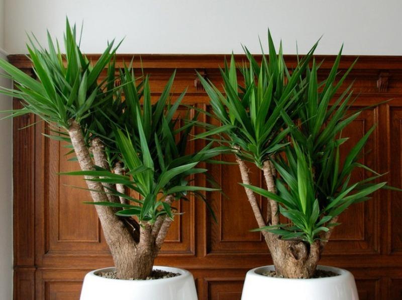 Какие растения нужно унести зимой с кухни, чтобы они не погибли