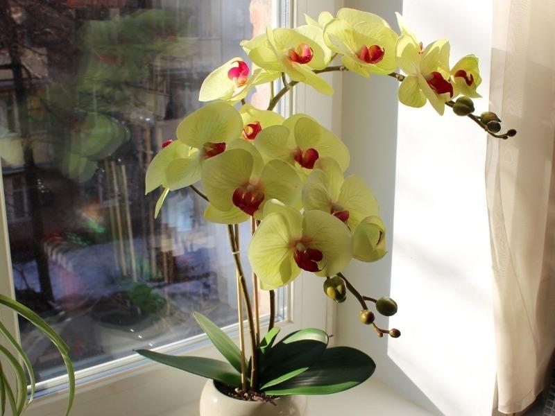 Как пересадить орхидею, чтобы не травмировать нежный цветок