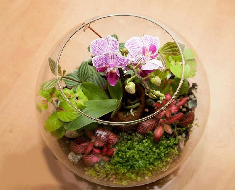 Какие растения можно посадить во флорариум, и он станет украшением комнаты