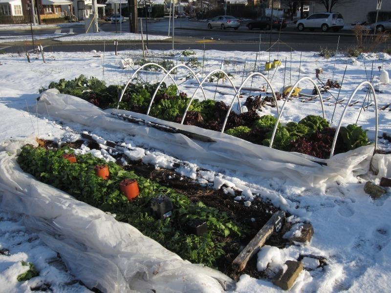 6 дел, которые садоводу нужно не забыть в декабре