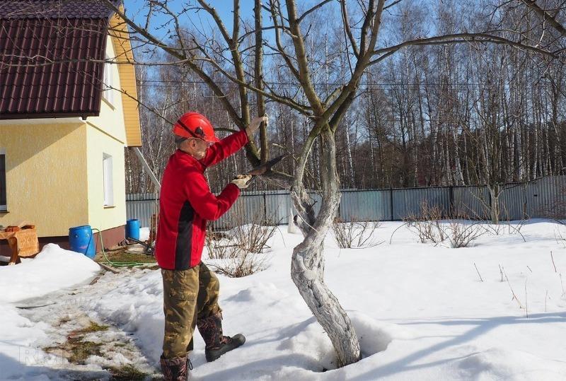 Как с пользой провести время на даче зимой – 6 идей