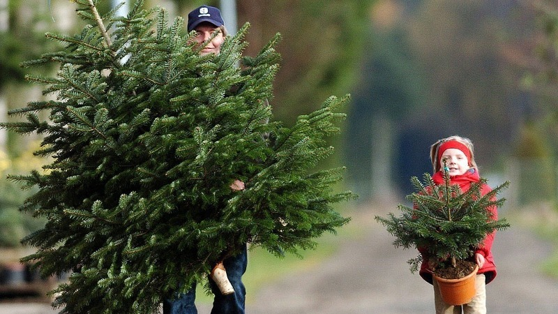 Как правильно выкинуть елку, чтобы не навлечь на себя беду