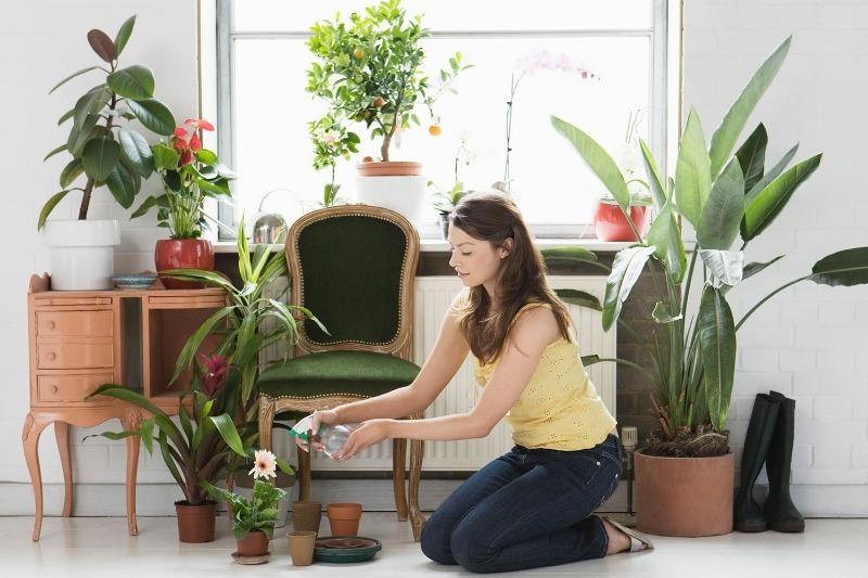 Как подготовить комнатные растения к зиме, чтобы они легко ее перенесли