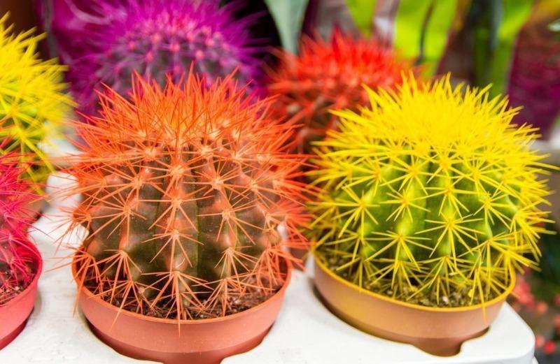 5 кактусов, которые проживут больше 100 лет при должном уходе
