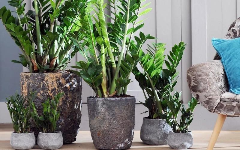 5 растений, которые преобразят скучное рабочее место в офисе