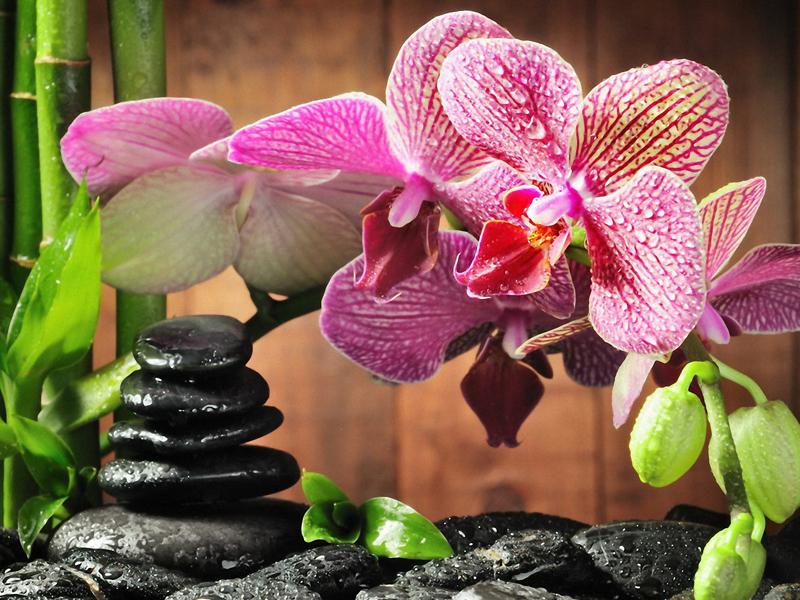 Будут цвести круглый год: 3 правила полива орхидей