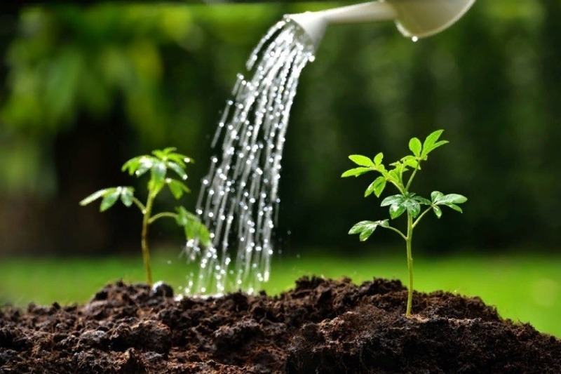 6 роковых ошибок при поливе, которые приводят к снижению урожаев