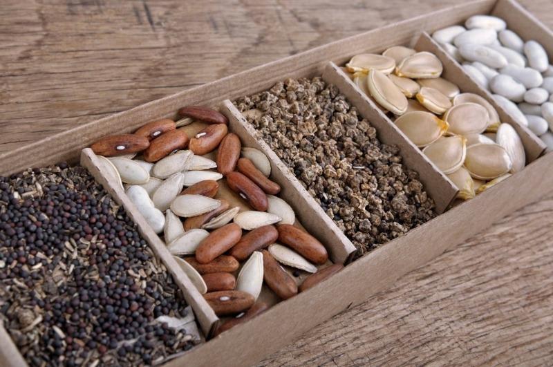 4 варианта, чем можно протравливать семена, чтобы сделать рассаду богатой и здоровой