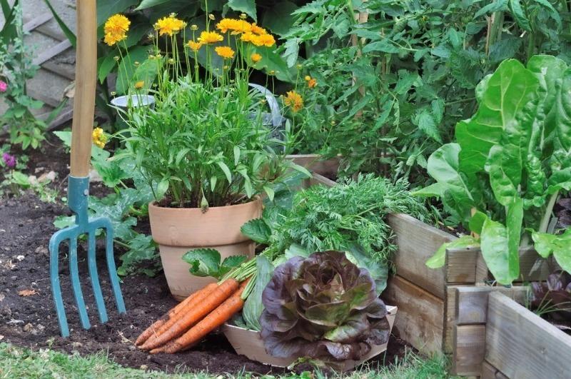 Можно посадить где угодно: 11 огородных культур, которые не боятся тени