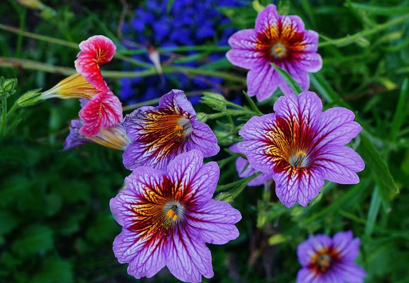 4 шикарных дачных цветка, о которых все незаслуженно забыли