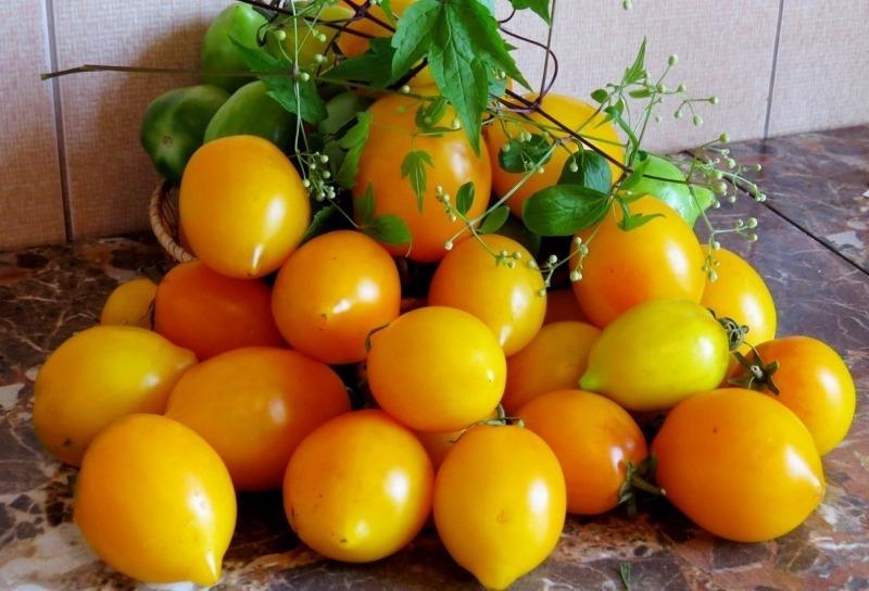 7 проверенных сортов томатов, которые я рекомендую посадить в 2020 году
