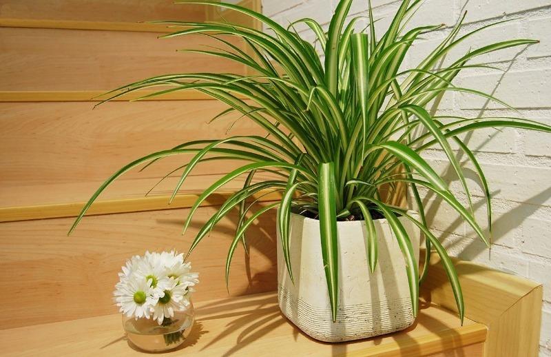 7 красивых комнатных растений, которые выживут в тесной комнате без света