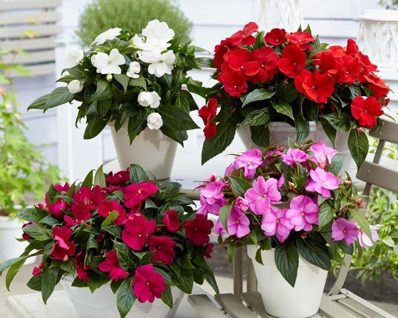 Комнатные растения, которые могут цвести круглый год