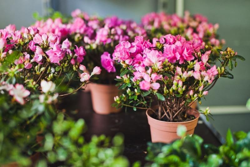 6 душистых растений, которые заменят в доме ароматизаторы воздуха