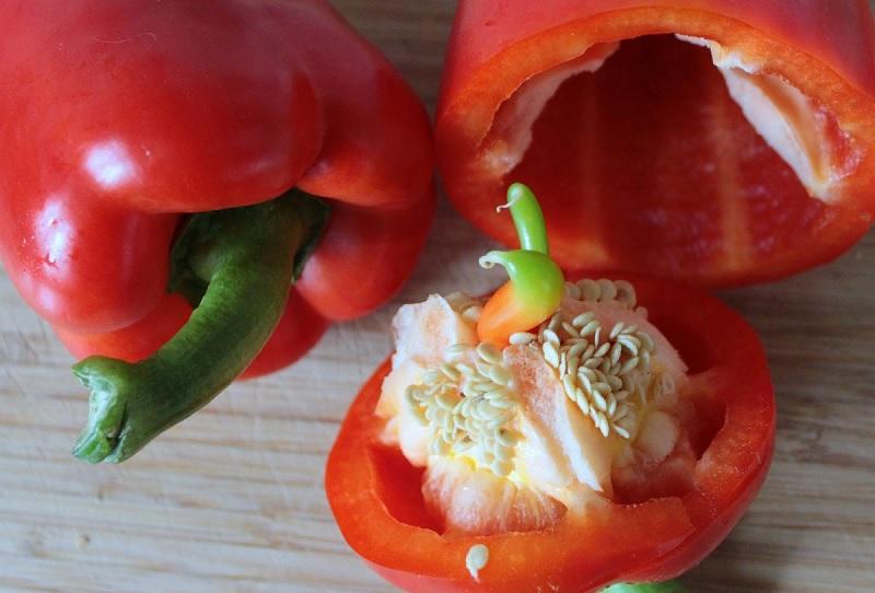 Прорастила на рассаду семена перца, оставшиеся после готовки: не вижу разницы с дорогими сортами
