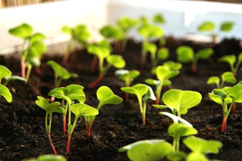 Семена на рассаду: что важно подготовить для посева и выращивания