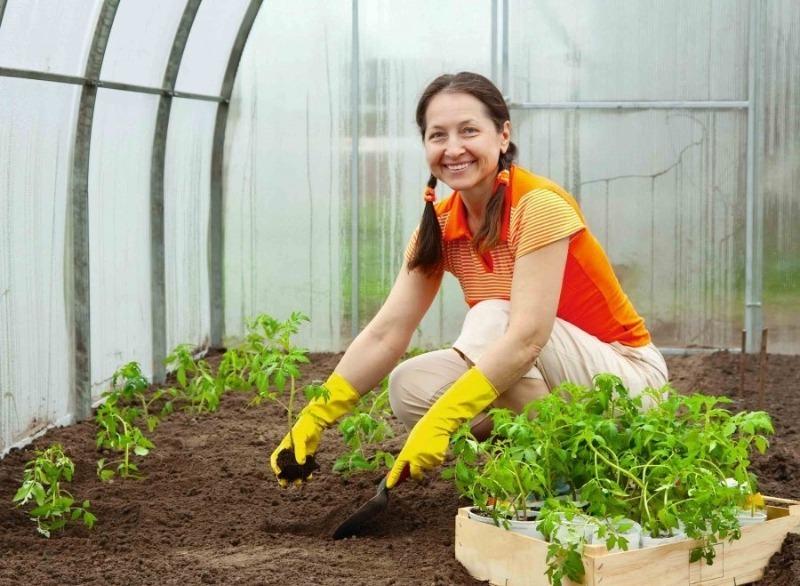 Гибель рассады: 7 компонентов, которые нельзя добавлять ни в одну почвосмесь