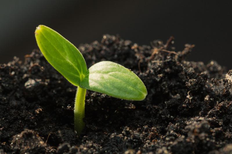 Почему не всходят семена огурцов: 6 самых частых ошибок дачников