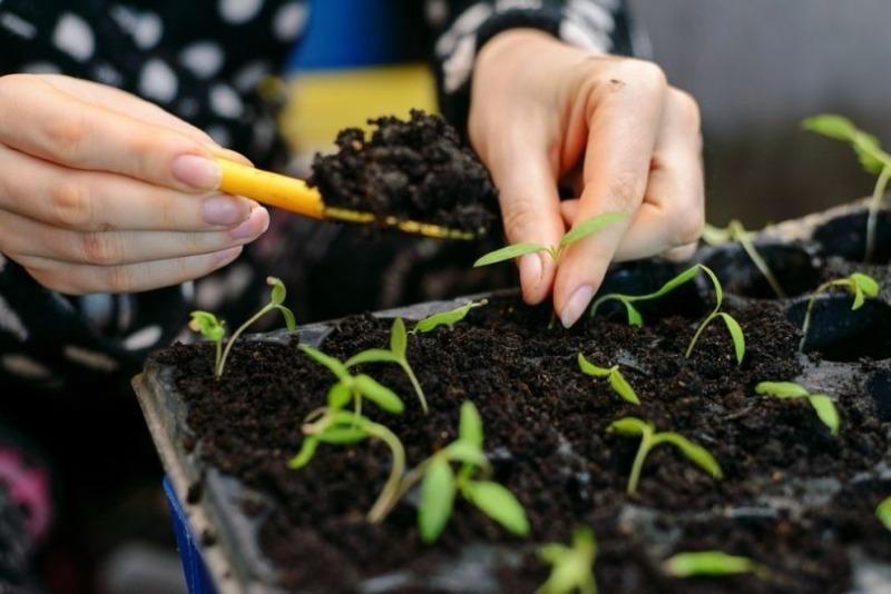 8 видов субстрата для выращивания крепкой и качественной рассады помидоров