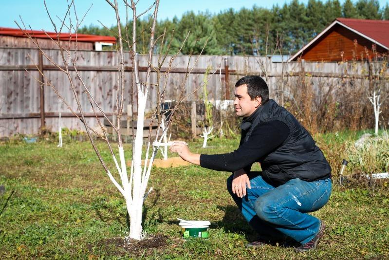 4 правила ухода за яблоней весной, чтобы получить крупный урожай