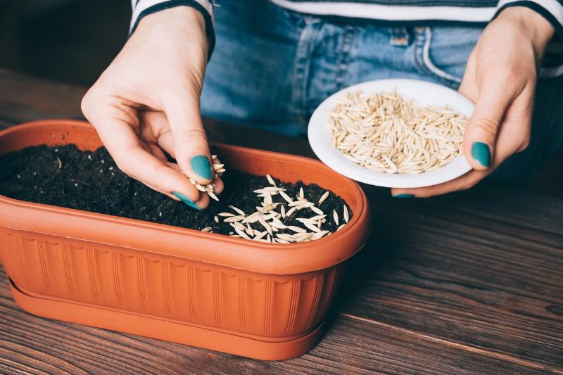 Предпосевная обработка семян: 7 эффективных способов, которые чаще всего используют в домашних условиях