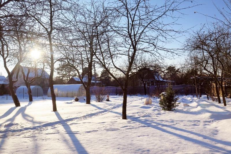 Подготовка к урожайному сезону: 9 важных дел, которые следует выполнить ранней весной