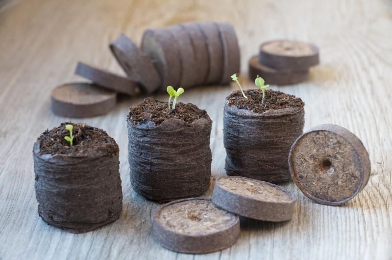 7 удивительных способов выращивания рассады, о которых вы могли не знать