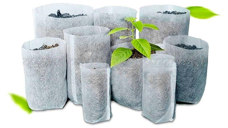 Как выращивать рассаду в мешочках из спанбонда