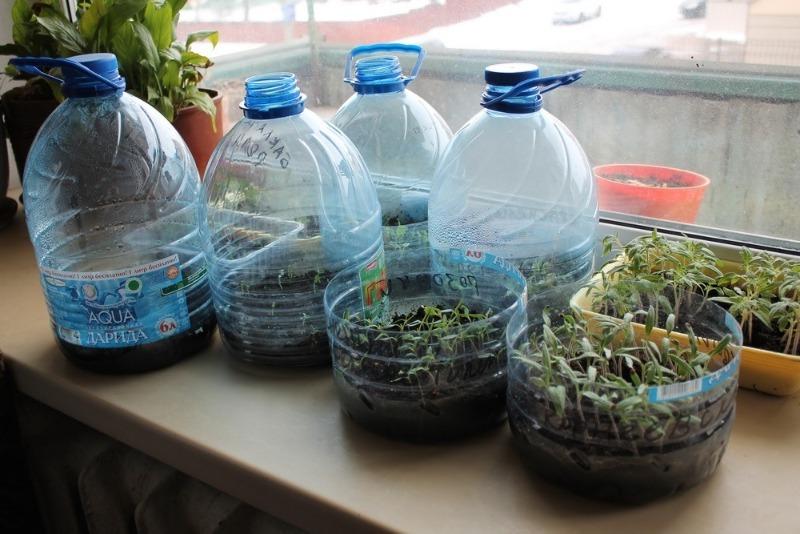Простой способ вырастить рассаду и легко перевезти ее на дачу