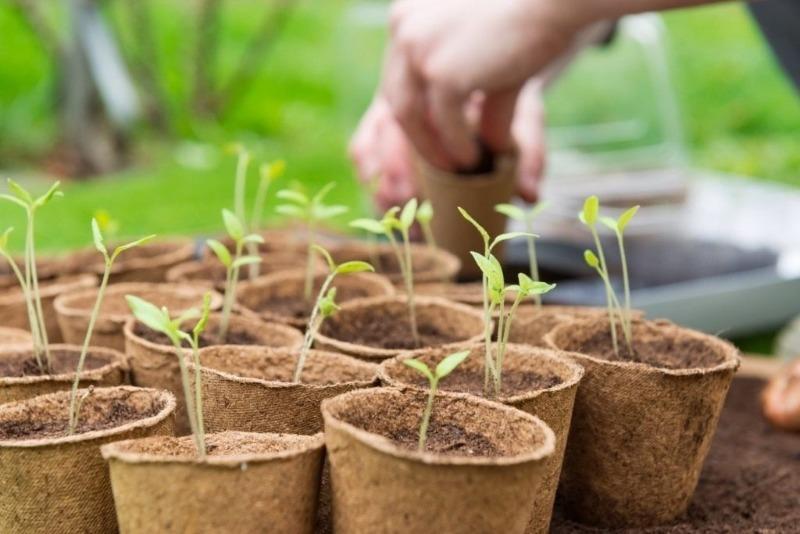 7 хитростей выращивания рассады, которые помогут получить богатый урожай