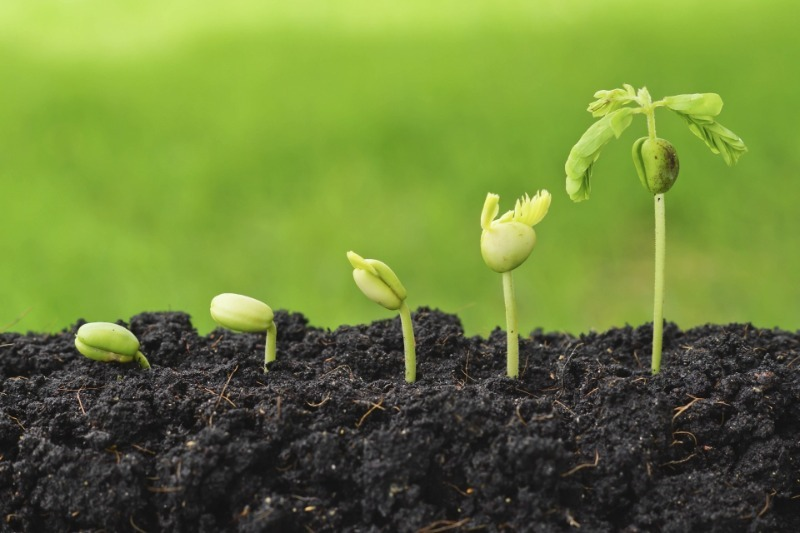 Как прорастить семена с ингибиторами, чтобы всходы появились быстрее