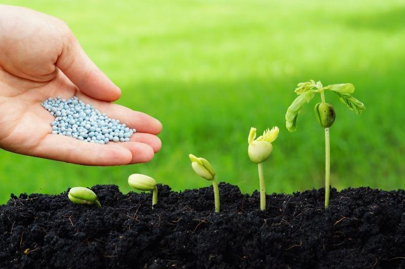 4 ошибки при внесении удобрений, которые мешают растениям активно развиваться