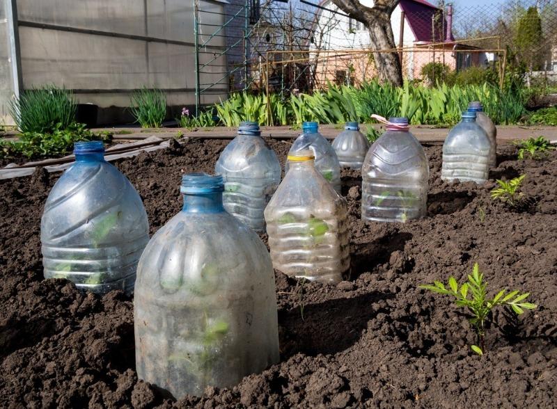 посадка огурцов в пластиковые бутылки фото гараж, открыл