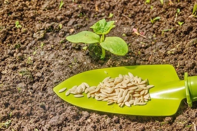 Как обработать семена перед посадкой, чтобы быстро появились ростки