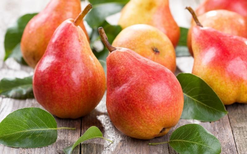 7 правил обрезки груши для крупных и сочных плодов