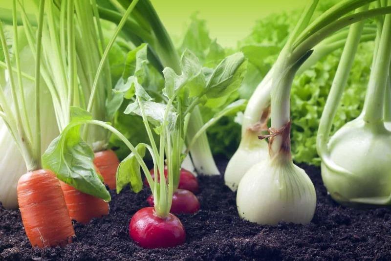 5 ошибок при посеве овощей в открытый грунт, из-за которых урожая не дождаться