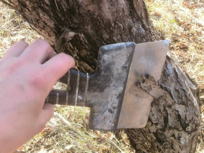 Как избавиться от лишайников в саду, чтобы они не мешали росту плодовых деревьев