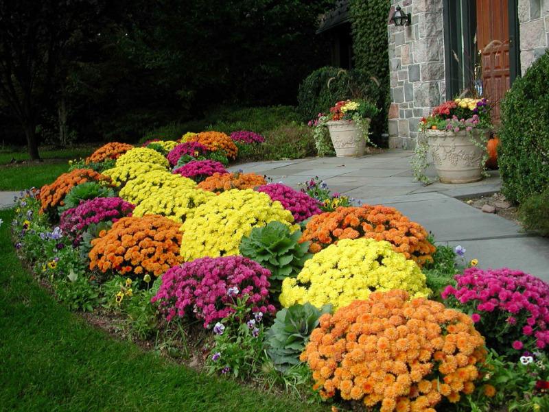 12 цветов, которые можно посадить под палящим солнцем