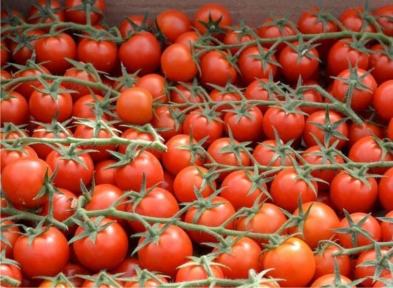 8 неприхотливых сортов томатов черри для открытого грунта