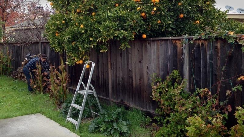 Способы решить проблему с соседскими деревьями, которые мешают вам на участке