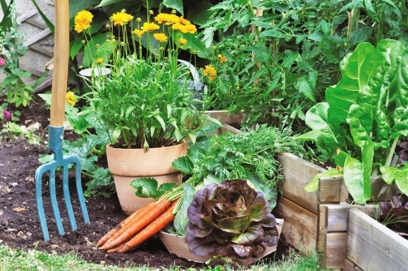 5 причин, почему растения на участке не развиваются и не дают урожай