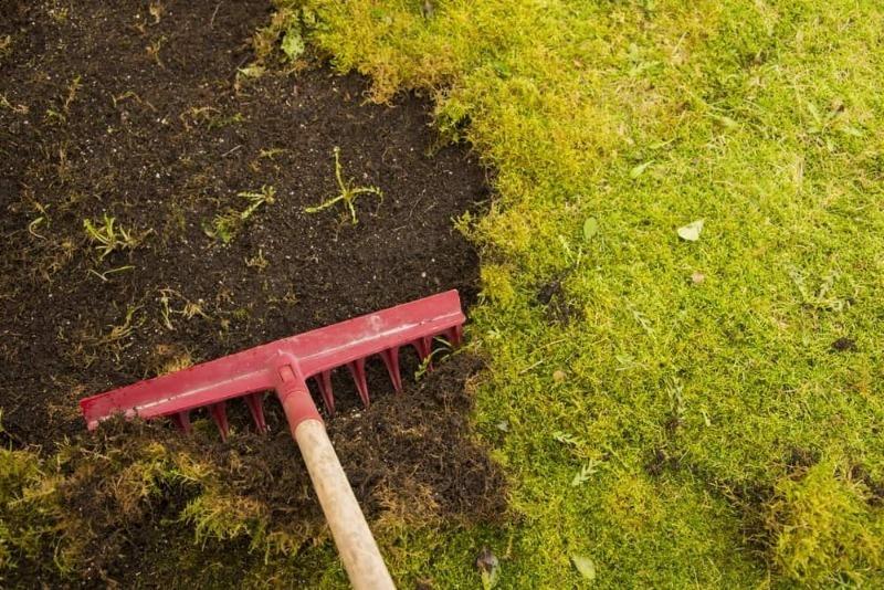 9 способов избавиться от мха на дачном участке