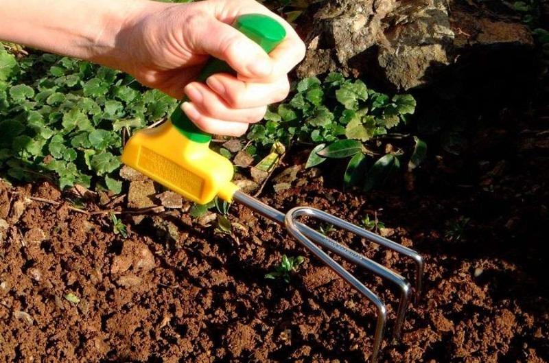 3 совета, которые помогут сделать почву на участке самой плодородной во всем массиве