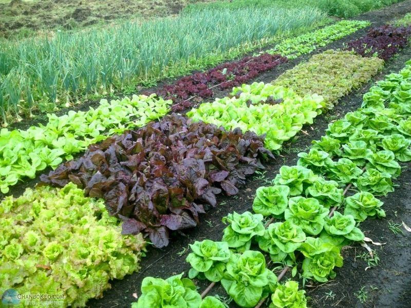 Натуральные подкормки для дачных растений, которые найдутся у каждого дома
