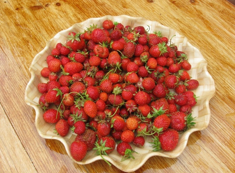 7 ошибок дачника, из-за которых ягоды клубники мельчают