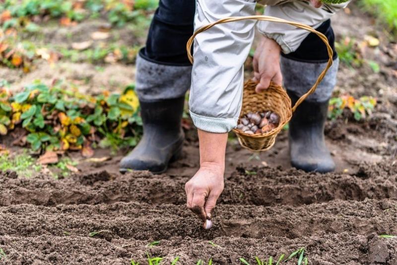 6 работ в огороде, которые дачники делают зря