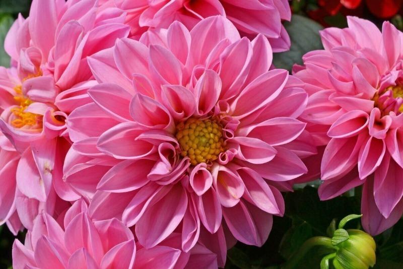 11 растений, которые будут радовать дачника до поздней осени