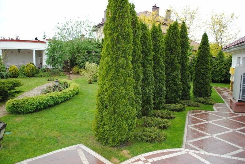 Какие деревья по приметам нельзя сажать рядом с домом
