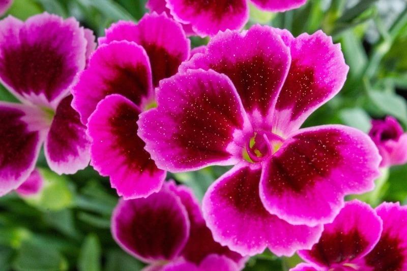 7 растений для клумбы, которые не требуют полива